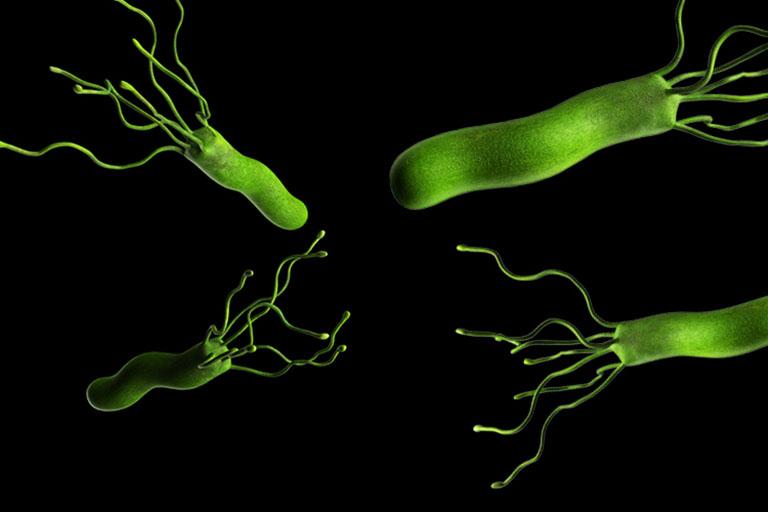 vi khuẩn H.pylori