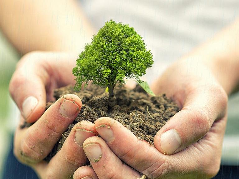 Thư giãn cơ thể, trồng cây xanh là thói quen giúp cơ thể khỏe mạnh