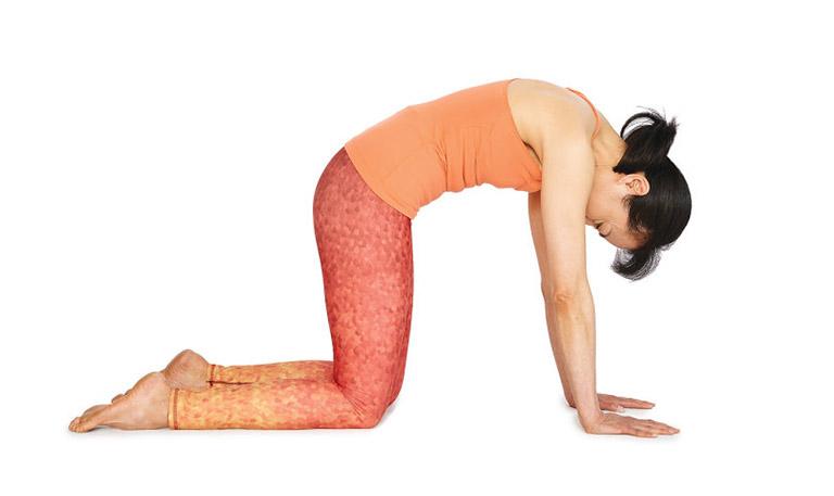 yoga cho người đau khớp háng