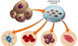 Mô phỏng tế bào gốc