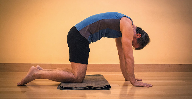 cat pose là động tác yoga phổ biến