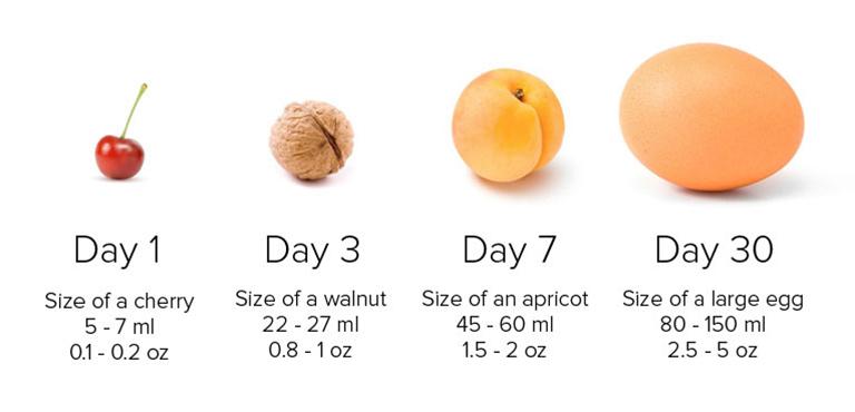 Minh họa kích thước dạ dày của trẻ sơ sinh