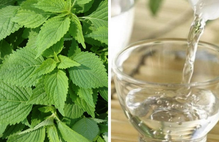 Rượu trắng kết hợp với rau kinh giới trị mề đay