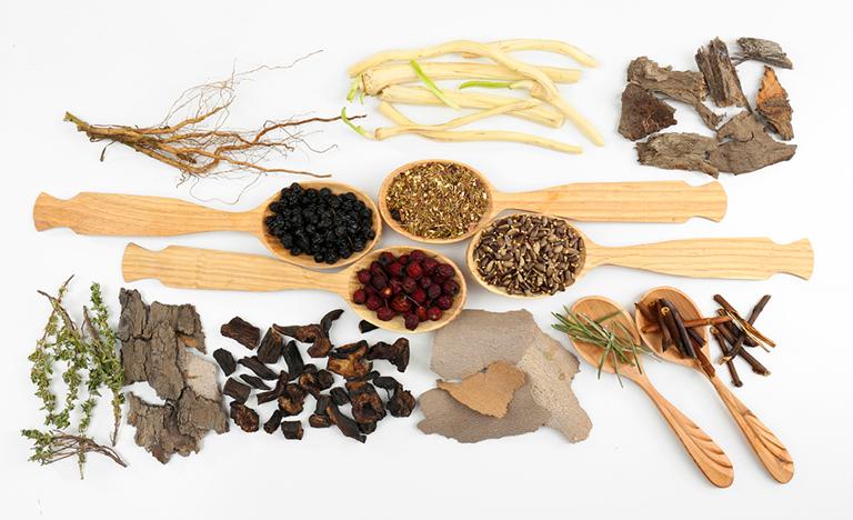 Kết hợp cây ô rô với các vị thuốc khác đê chữa rong kinh