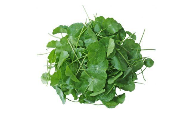 Cây rau má có nhiều tác dụng tốt đối với sức khỏe.