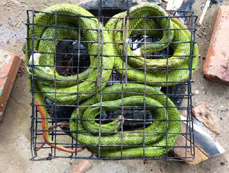 Nướng nguyên con rắn lục để tạo thành bột rắn