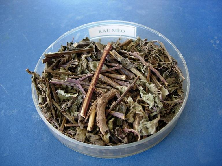 Cây râu mèo phơi khô được sử dụng để làm thuốc