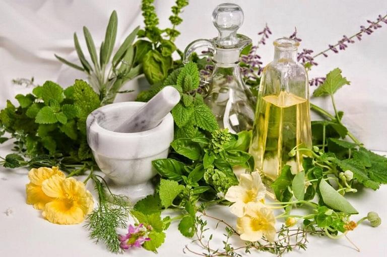 Các loại thảo dược trị thoái hóa cột sống có ở quanh nhà