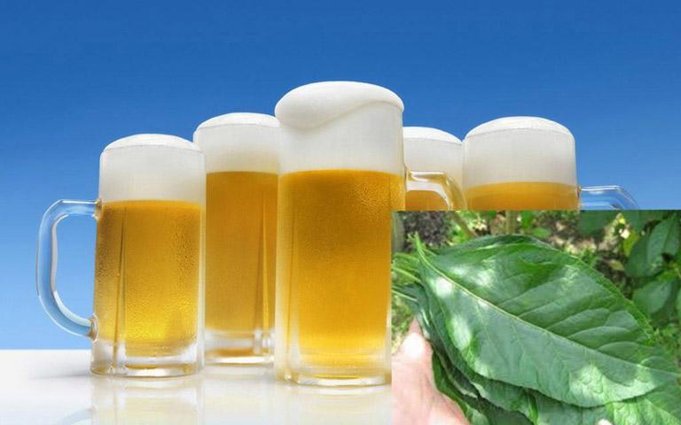 Bài thuốc chữa thoát vị đĩa đệm từ lá mật gấu và bia