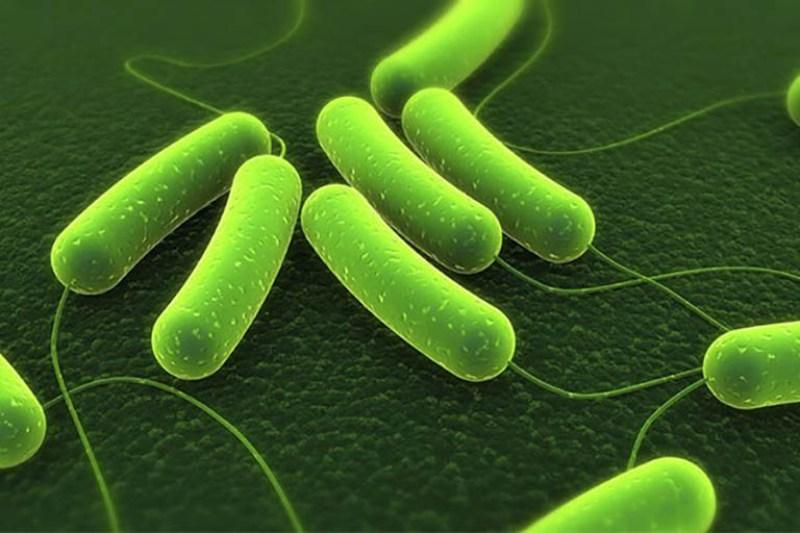 Vi khuẩn HP gây nên bệnh dạ dày