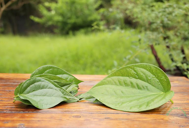 Chữa viêm phế quản bằng lá trầu không nguyên chất