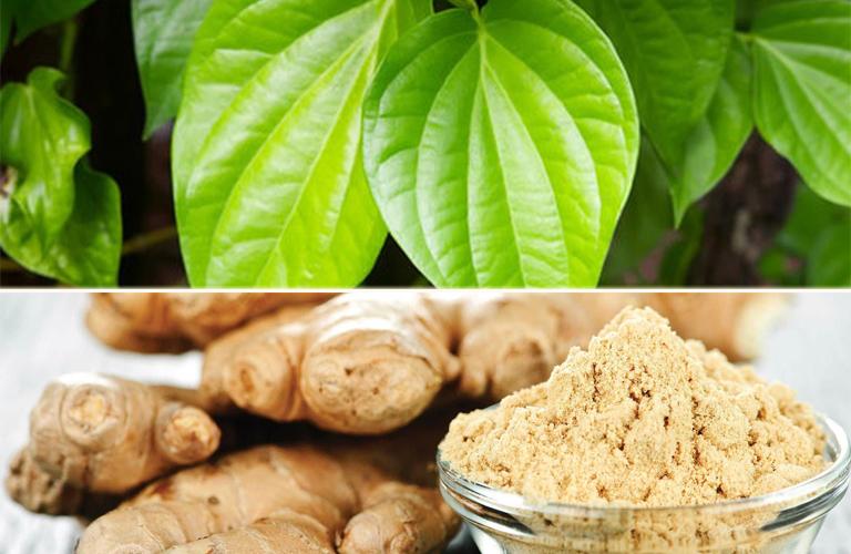 Bài thuốc kết hợp gừng tươi và lá trầu không chữa viêm phế quản