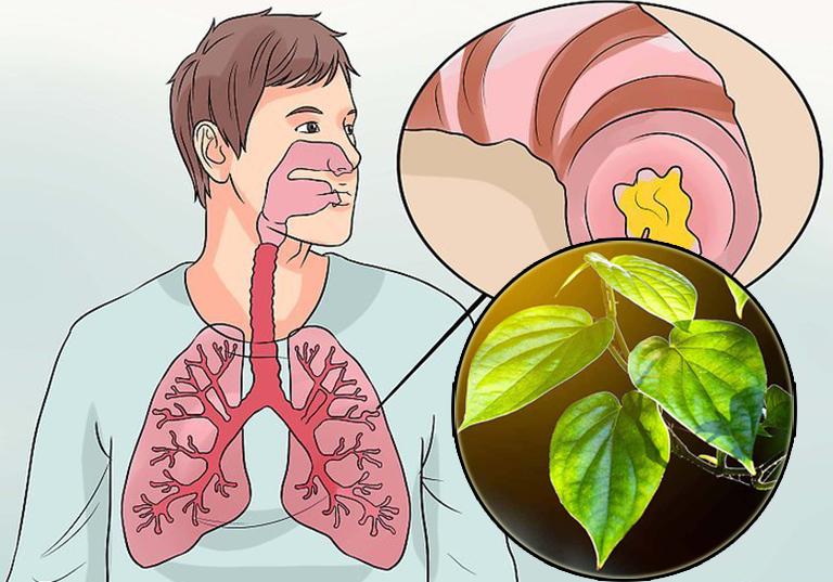 Bỏ túi cách chữa viêm phế quản bằng lá trầu không