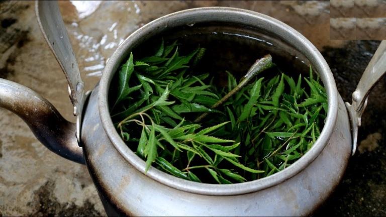 Phương pháp sắc nước từ lá đinh lăng để chữa viêm da cơ địa rất dễ thực hiện