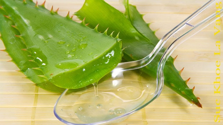 Chất nhầy từ lá nha đam có nhiều công dụng chữa bệnh