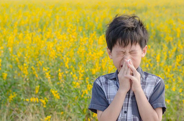 thuốc đông y trị viêm xoang viêm mũi dị ứng