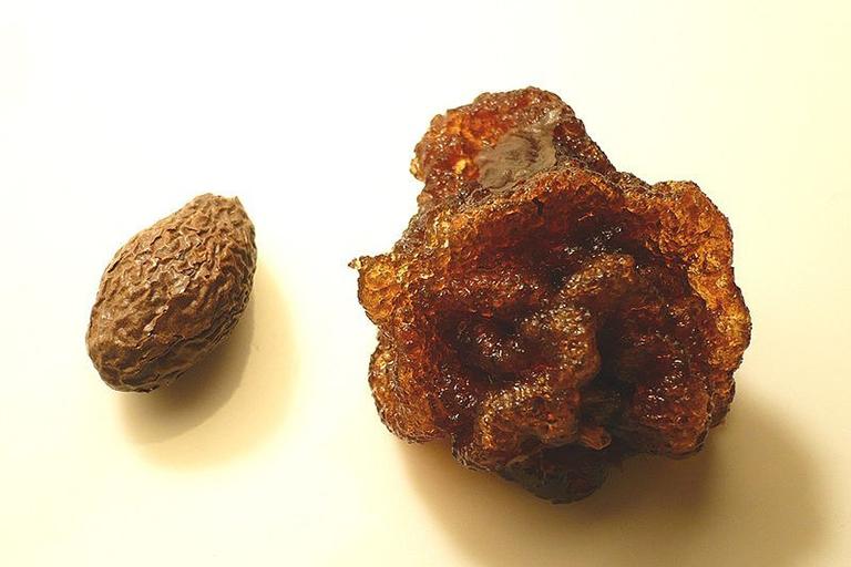Cách dùng hạt đười ươi chữa bệnh gai cột sống