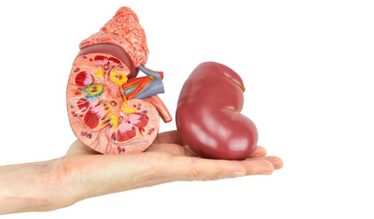 Cần sinh hoạt lành mạnh, ăn uống đầy đủ dinh dưỡng để bảo vệ trái thận và phòng ngừa bệnh thận yếu.