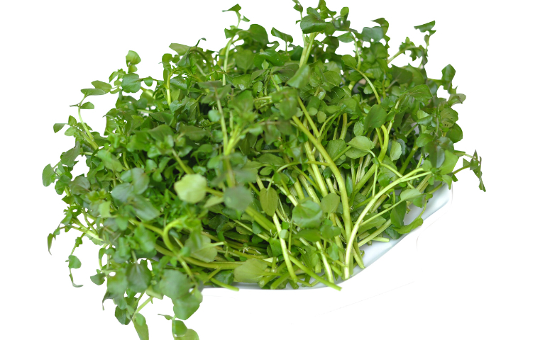 Bài thuốc nam từ rau cải xoong có khả năng loại trừ các triệu chứng của bệnh viêm phế quản.