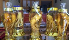 Rượu ngâm đinh lăng mang lại nhiều tác dụng tốt cho sức khỏe