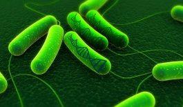 Thông tin về tình trạng vi khuẩn Hp kháng thuốc và cách điều trị