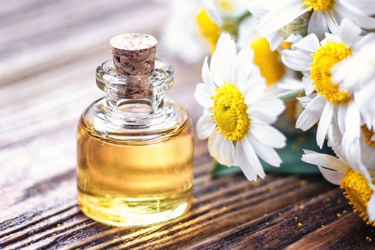 Chữa đau vai gáy bằng tinh dầu hoa cúc