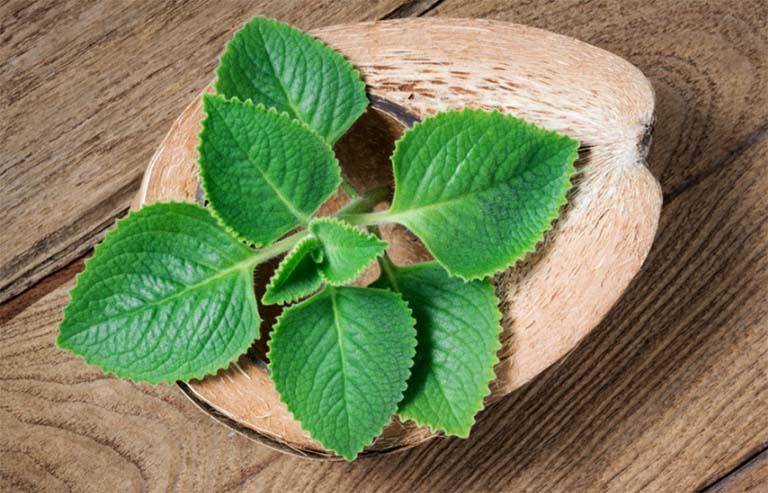 Những điều cần lưu ý khi sử dụng trị viêm họng, ho bằng rau tần lá dày