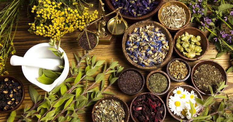 Đông y thường kết hợp củ điền thất với một số loại dược liệu khác để chữa bệnh.