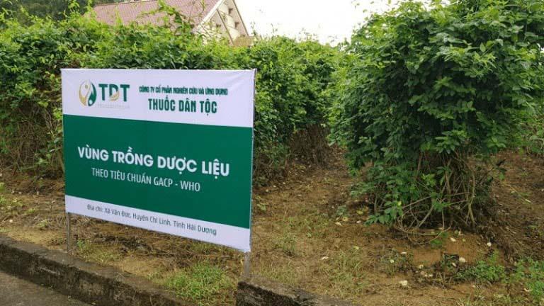 Trung tâm Thuốc dân tộc sở hữu vườn dược liệu sạch