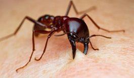 viêm da tiếp xúc côn trùng