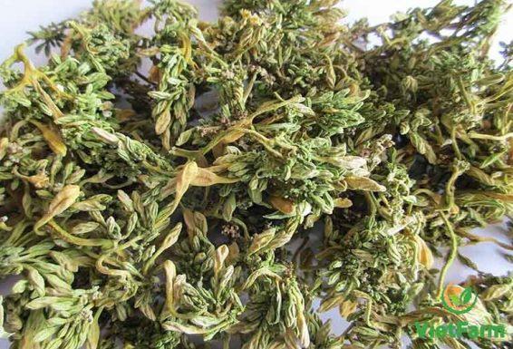 Dược liệu được sử dụng phổ biến ở dạng phơi khô