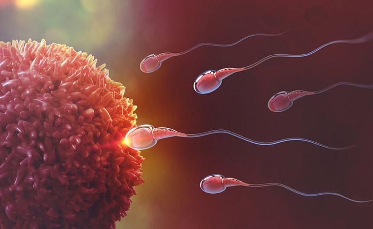 cách làm tăng chất lượng tinh trùng