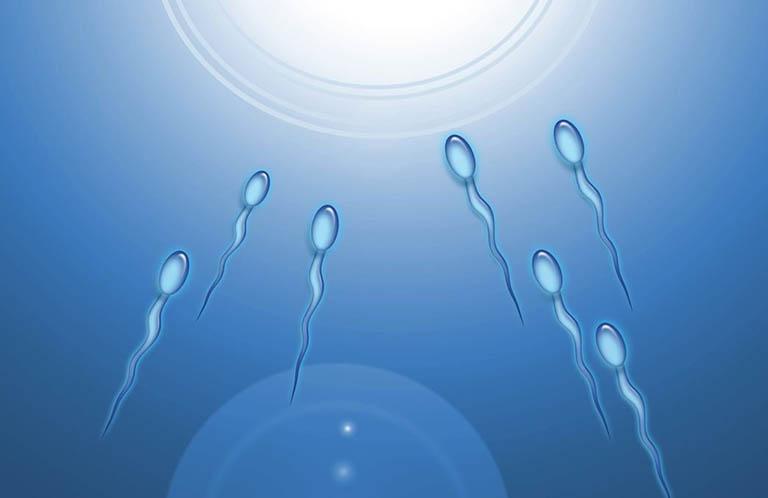 Ở những người đàn ông khỏe mạnh, quá trình sản xuất tinh trùng của tinh hoàn sẽ xảy ra hàng ngày