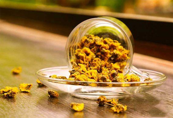 Trà hoa cúc - Công dụng và hiệu quả cho sức khỏe con người