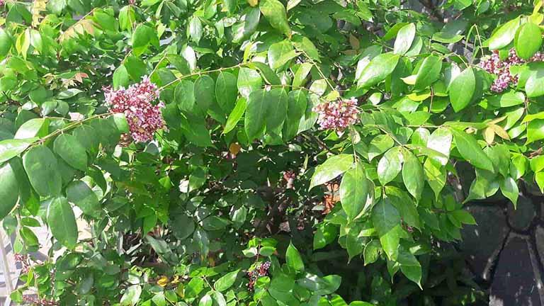 10 loại lá cây trị ghẻ ngứa hiệu quả