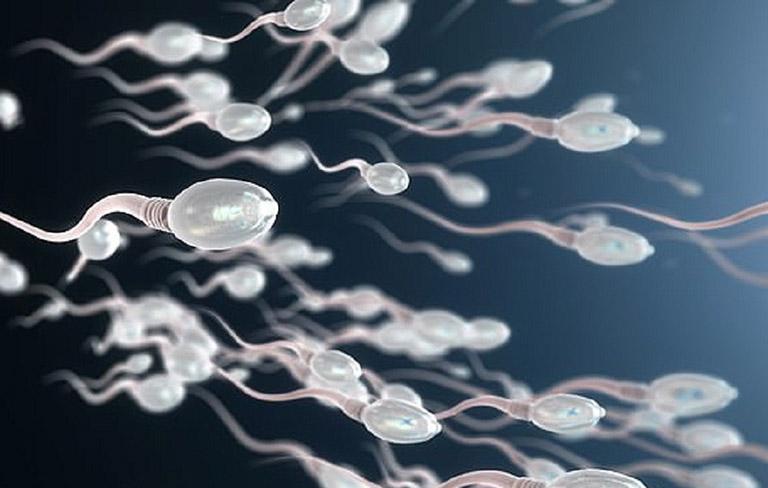 Thận yếu có ảnh hưởng đến tinh trùng của nam giới không?