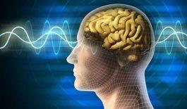 Vật lý trị liệu bằng điện sinh học