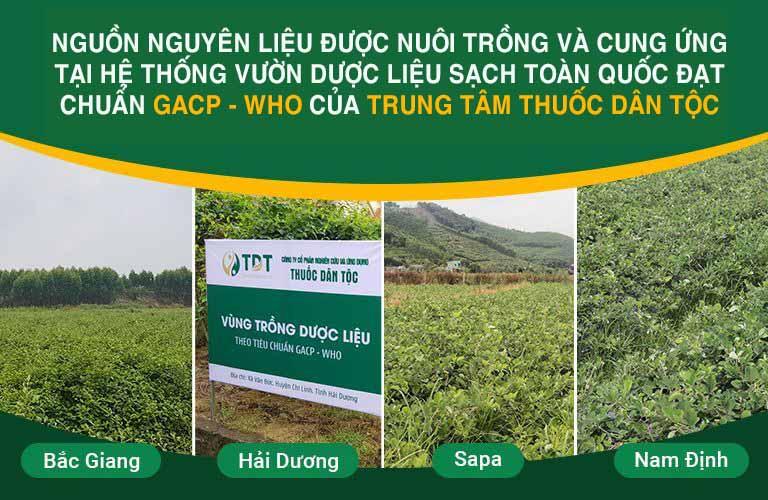 Nguồn nguyên liệu được nuôi trồng và thu hái trực tiếp tại hệ thống vườn dược liệu của Trung tâm Thuốc dân tộc