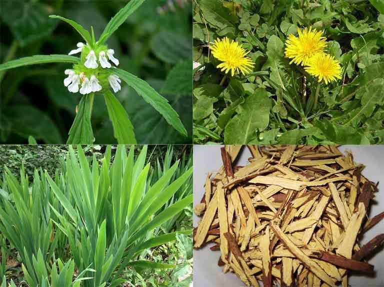 Kết hợp cây mè đất cùng với một số dược liệu khác để gia tăng công dụng điều trị bệnh