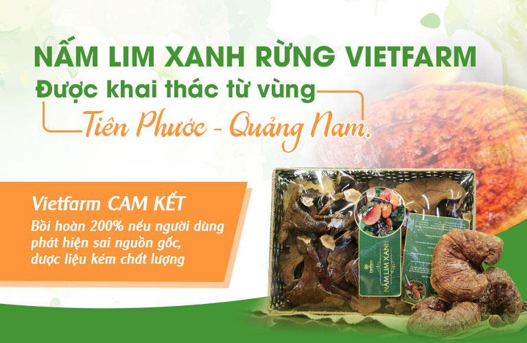 Nấm lim xanh rừng Vietfarm cam kết chính gốc Tiên Phước Quảng Nam