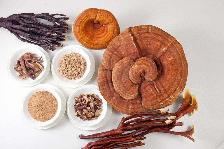 chữa gan nhiễm mỡ bằng thuốc nam từ nấm linh chi